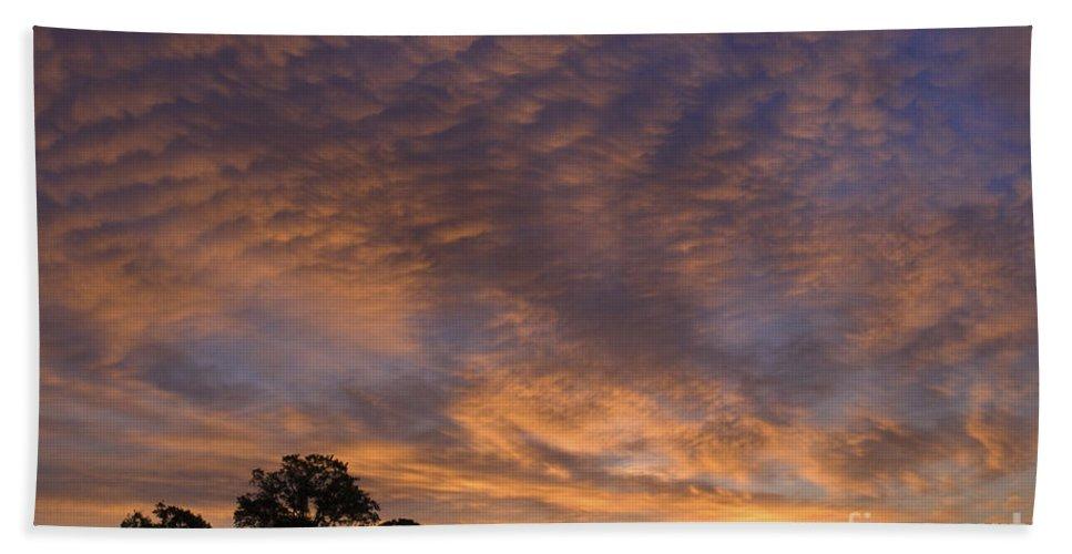 Sandra Bronstein Hand Towel featuring the photograph California Oaks And Sunrise by Sandra Bronstein