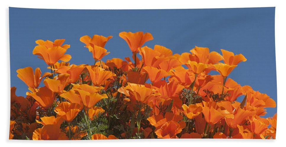 Sandra Bronstein Hand Towel featuring the photograph California Poppies by Sandra Bronstein