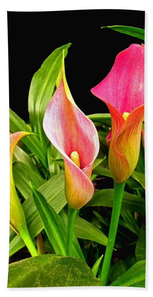 Nature Bath Sheet featuring the photograph Calla Lillies by Debbie Portwood