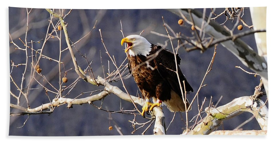 Calling Eagle Hand Towel featuring the photograph Calling For His Mate by Randall Branham