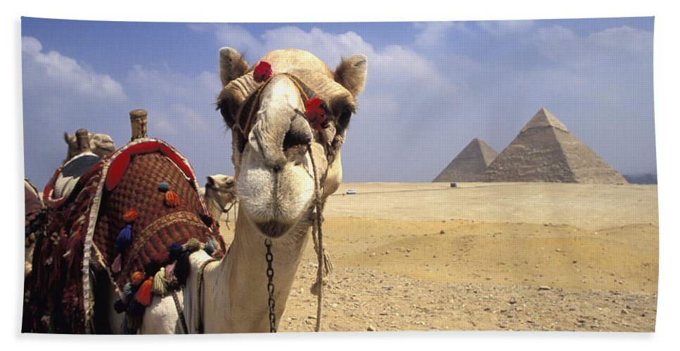Animal Head Bath Towel featuring the photograph Camel In Giza Egypt by Axiom Photographic