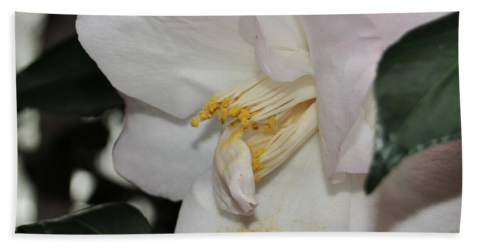 Camellia Bath Sheet featuring the photograph Camellia 18 by Terri Winkler