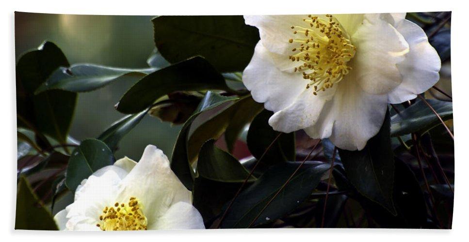 Camellia Bath Sheet featuring the photograph Camellia Nineteen by Ken Frischkorn