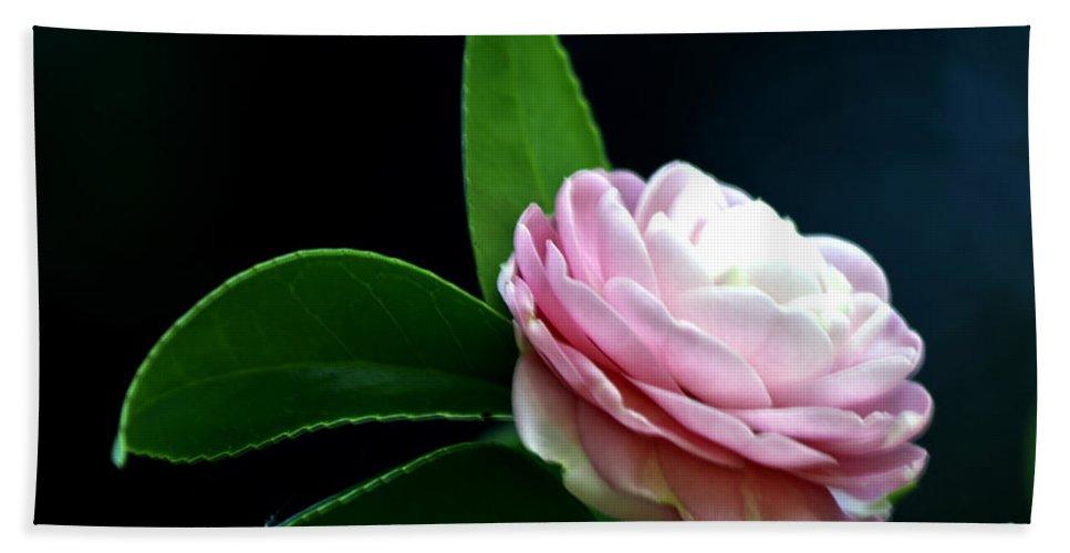 Camellia Bath Sheet featuring the photograph Camellia Twenty-four by Ken Frischkorn
