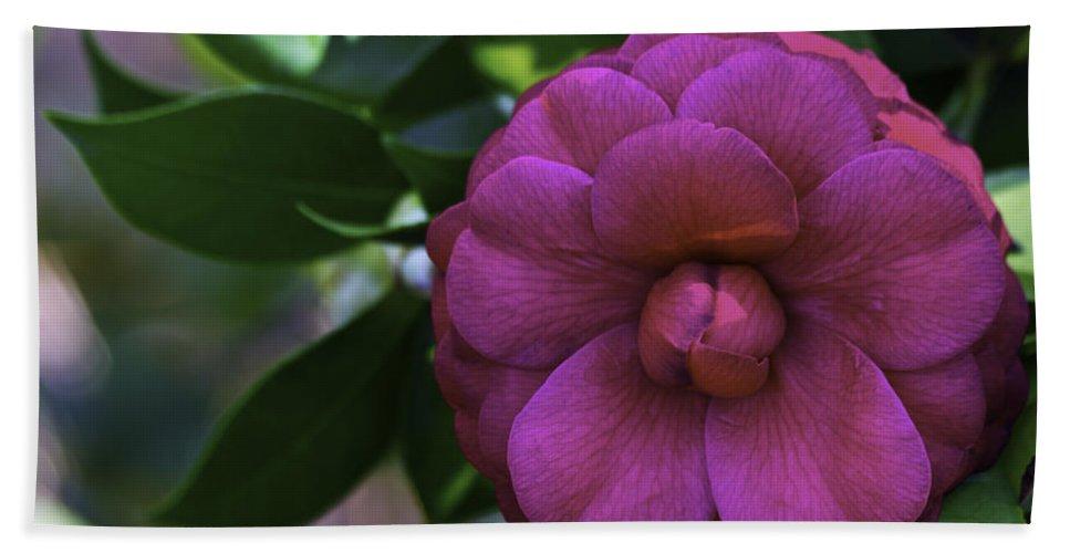 Camellia Bath Sheet featuring the photograph Camellia Twenty by Ken Frischkorn