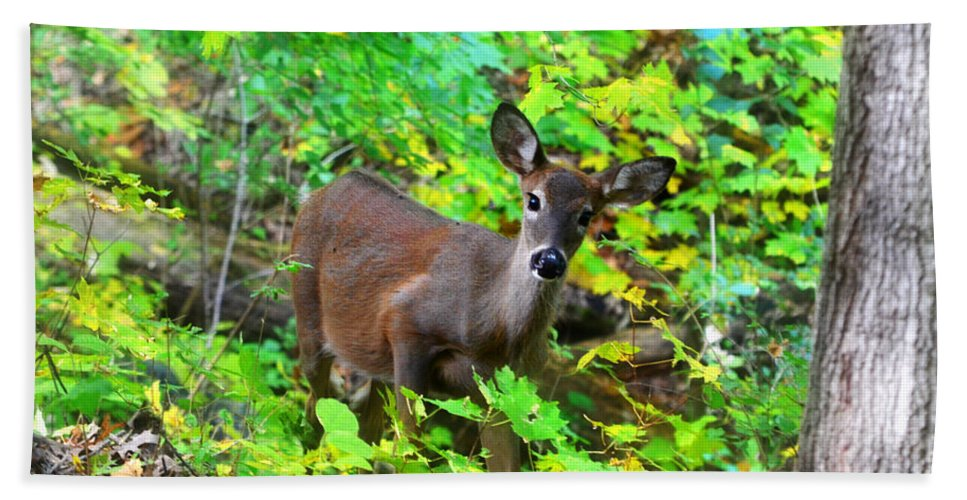 Landscape Hand Towel featuring the photograph Can I Help You My Deer by Peggy Franz