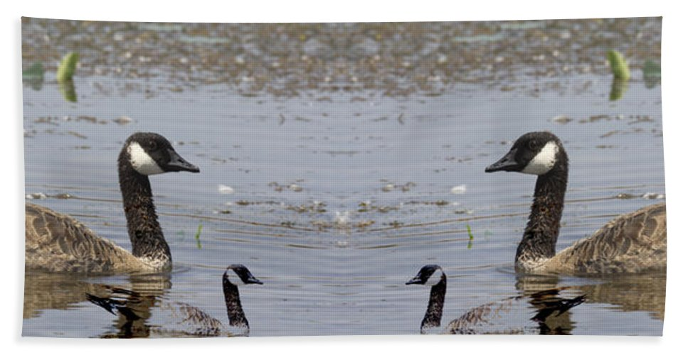 Canadian Goose Symmetry Hand Towel featuring the photograph Canadian Goose Symmetry by Douglas Barnard