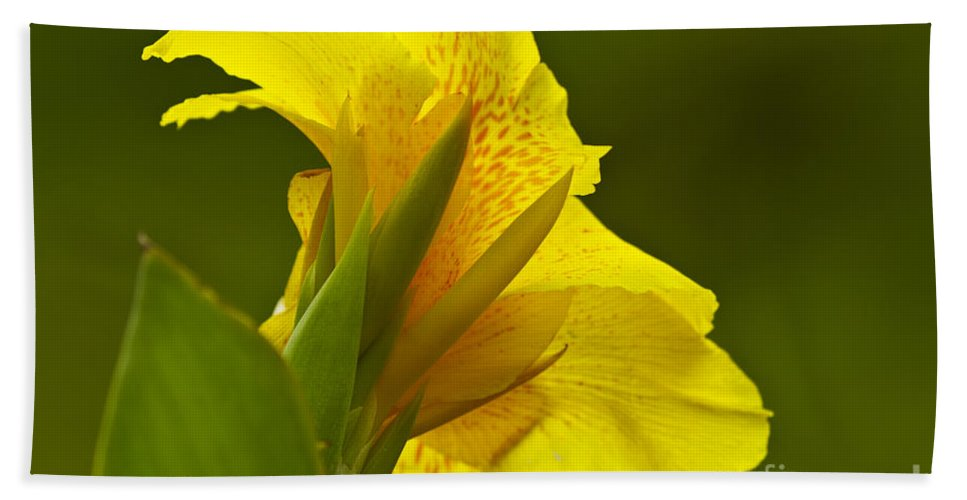 Nature Bath Sheet featuring the photograph Canna Lily by Heiko Koehrer-Wagner