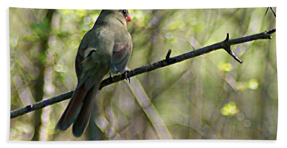 Cardinal Bath Sheet featuring the photograph Cardinal 5 by Joe Faherty