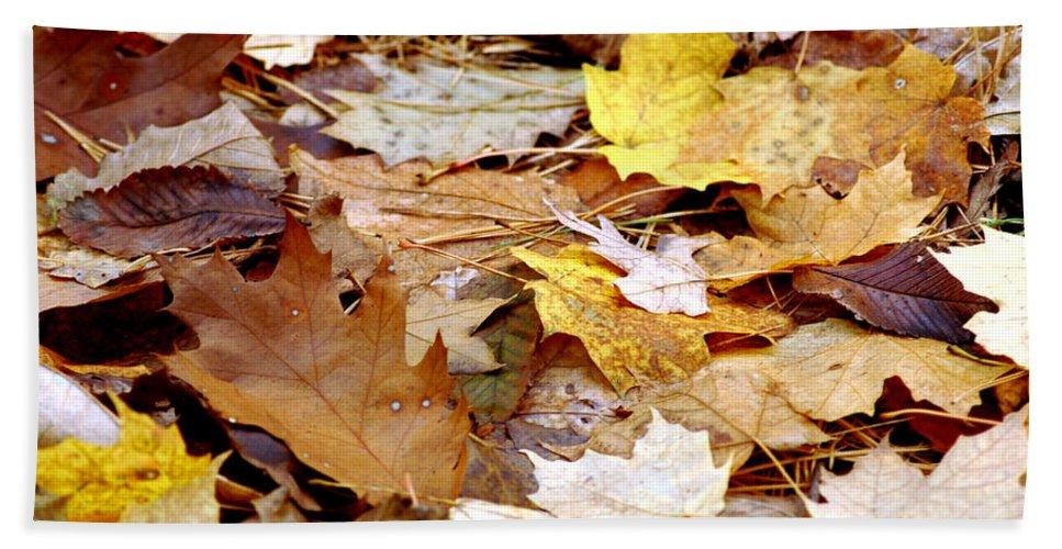 Usa Bath Sheet featuring the photograph Carpet Of Leaves by LeeAnn McLaneGoetz McLaneGoetzStudioLLCcom