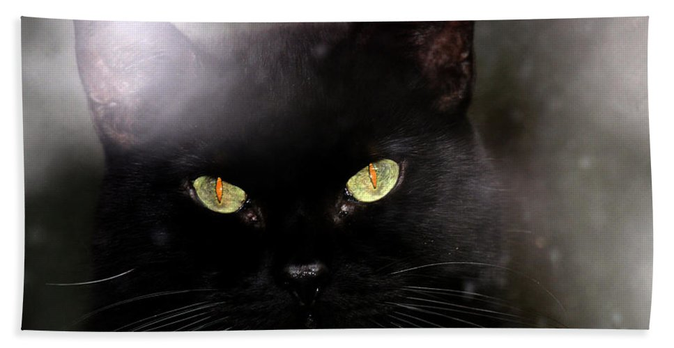 Cat Hand Towel featuring the photograph Cat Behind A Rain Spattered Window by Marie Jamieson