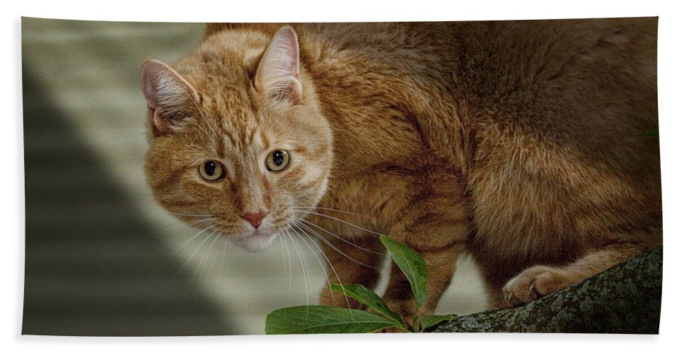 Art Bath Sheet featuring the photograph Cat Out On A Limb by Randall Nyhof