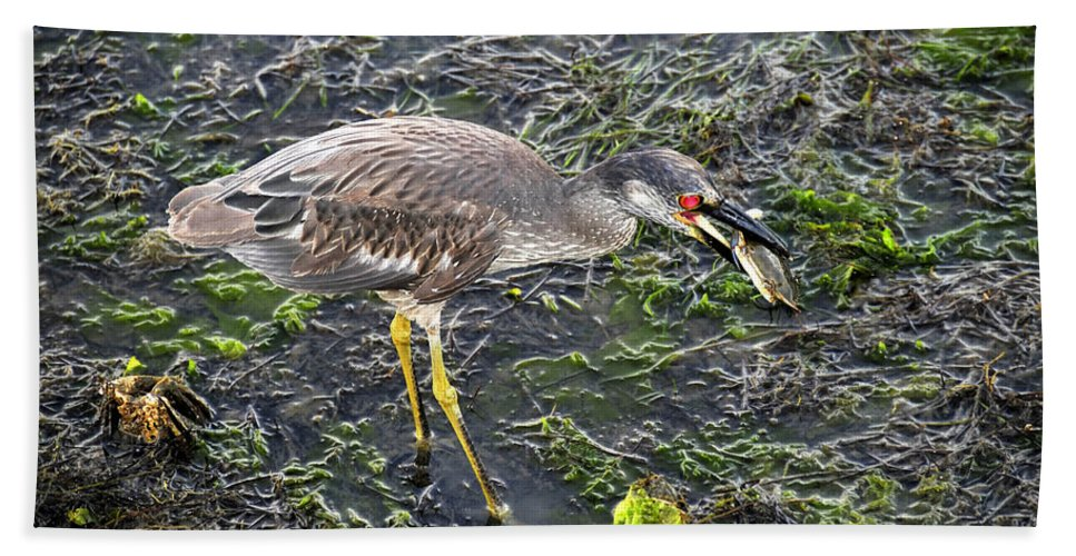 Wildlife Photography Bath Sheet featuring the photograph Catching Crab by David Lee Thompson