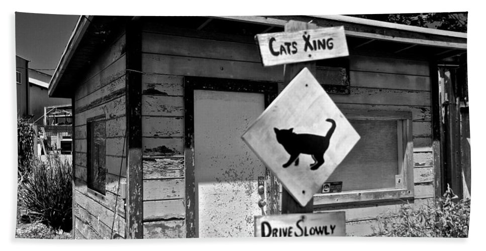 Cats Bath Sheet featuring the photograph Cats Xing by Eric Tressler