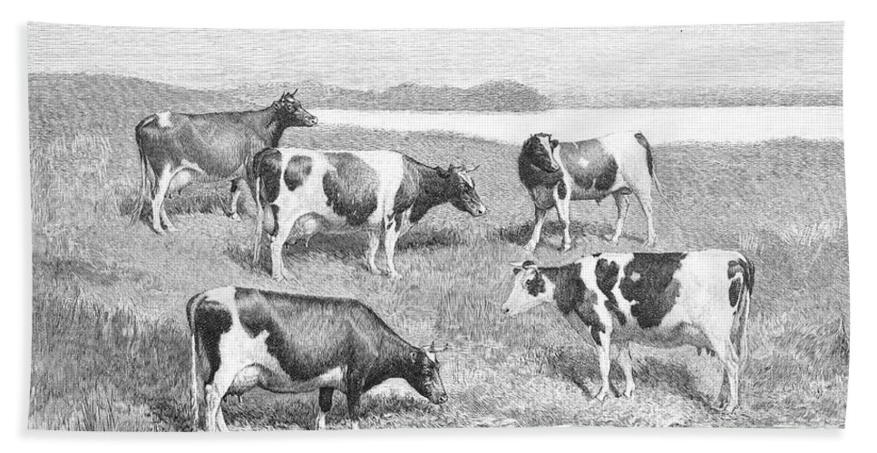 1888 Bath Sheet featuring the photograph Cattle, 1888 by Granger