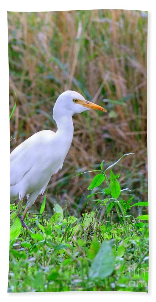 Birds Bath Sheet featuring the photograph Cattle Egret by Mary Deal