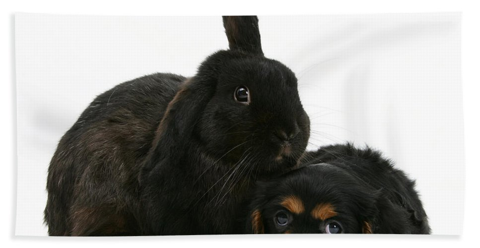 Nature Hand Towel featuring the photograph Cavalier King Charles Spaniel And Rabbit by Mark Taylor
