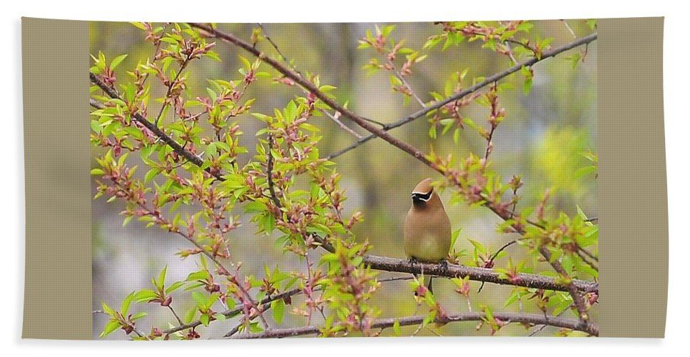 Cedar Waxwing Hand Towel featuring the photograph Cedar Waxwing by Terry DeLuco