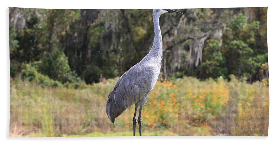 Sandhill Crane Bath Sheet featuring the photograph Central Florida Sandhill Crane With Oaks by Carol Groenen
