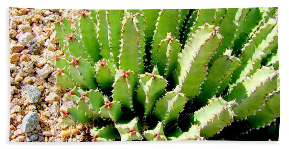 Cactus Hand Towel featuring the photograph Cereus Peruvianis Cactus by Mary Deal