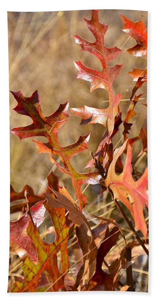 Orange Leaves Bath Sheet featuring the photograph Changing Colors by Carolyn Marshall