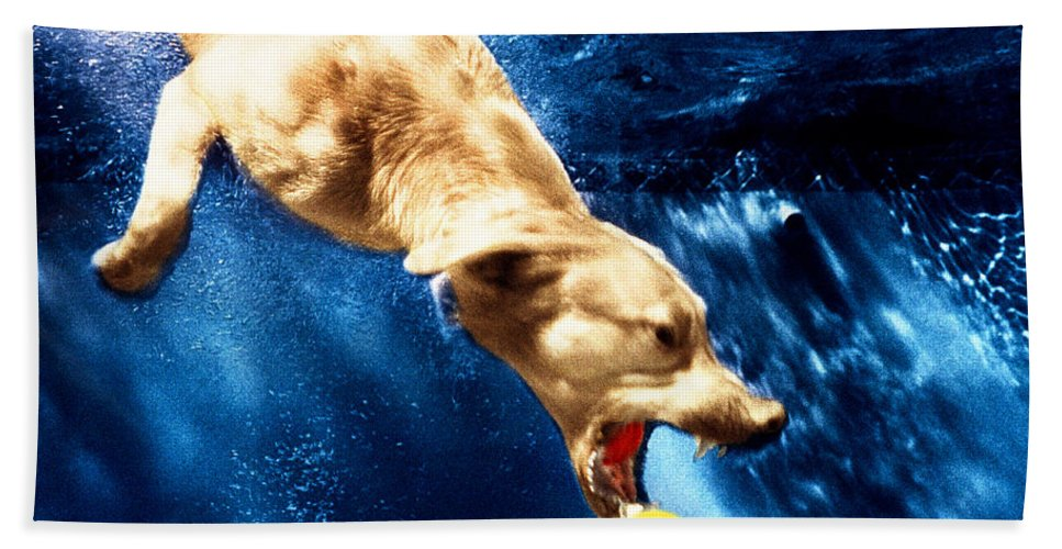 Dog Bath Sheet featuring the photograph Chase by Jill Reger