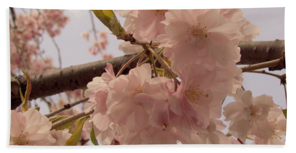 Cheery Hand Towel featuring the photograph Cherry Blossom 2 by Andrea Anderegg