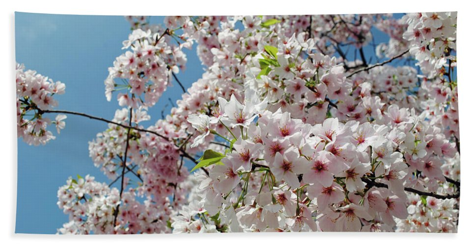 Cherry Hand Towel featuring the photograph Cherry Blossoms Of The Sky by Jost Houk