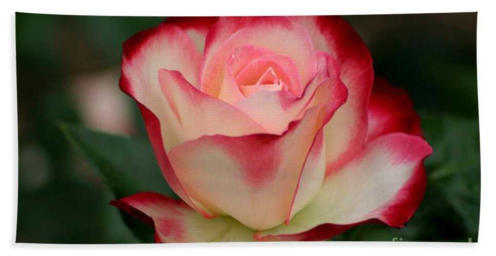 Roses Hand Towel featuring the photograph Cherry Parfait by Living Color Photography Lorraine Lynch
