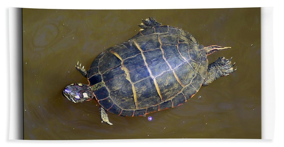 2d Bath Sheet featuring the photograph Chester River Turtle by Brian Wallace