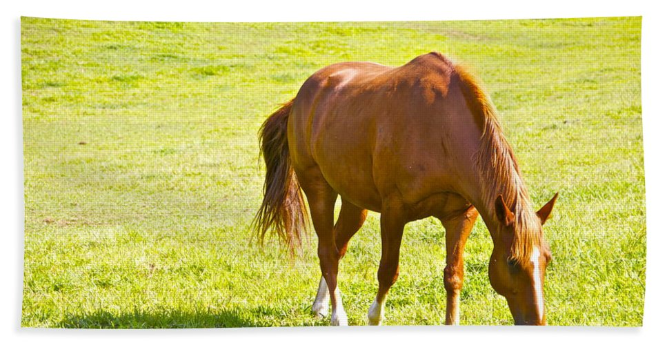 Horse Chestnut Grazing Pasture Farm Grass Scenic Hand Towel featuring the photograph Chestnut Grazing by Alice Gipson