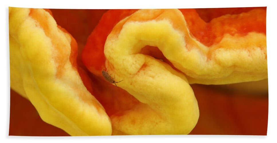 Fn Hand Towel featuring the photograph Chicken Of The Woods Laetiporus by Silvia Reiche