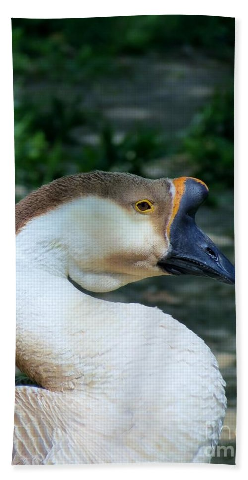 Goose Hand Towel featuring the photograph Chinese Goose by Art Dingo