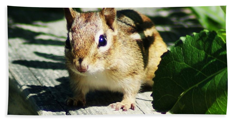 Chipmunk Bath Sheet featuring the photograph Chipmunk by Joe Faherty