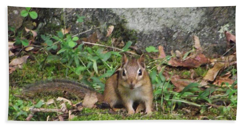 Nature Bath Sheet featuring the photograph Chipmunk by Michelle Welles