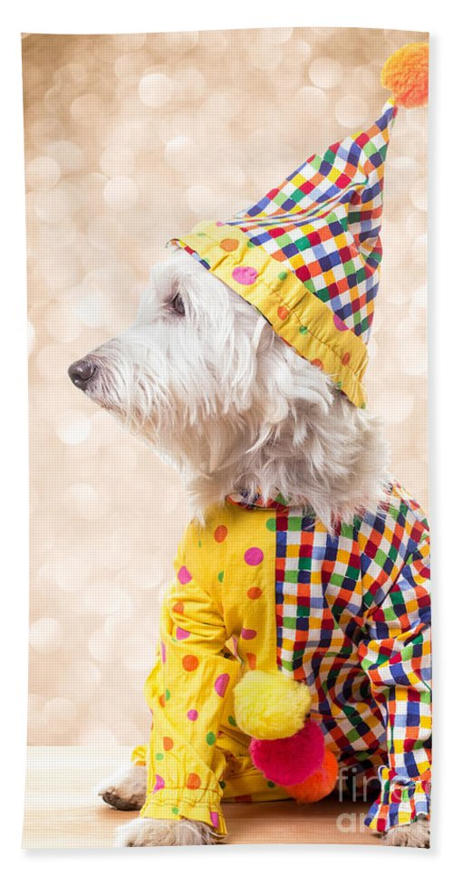 Circus Hand Towel featuring the photograph Circus Clown Dog by Edward Fielding