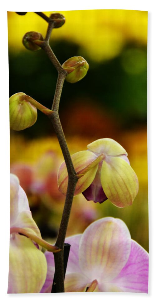 Flowers Hand Towel featuring the photograph Climbing Slowly by Angelina Tamez