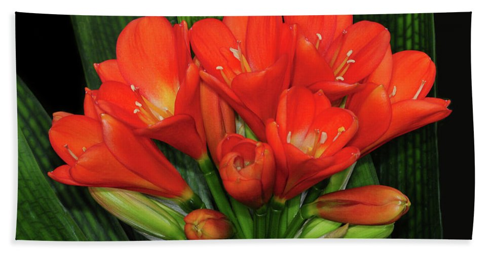 Clivia Bath Sheet featuring the photograph Clivia by Dave Mills