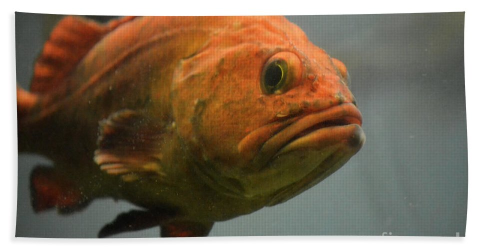 Undersea Gardens Hand Towel featuring the photograph Close And Fishy by Traci Cottingham