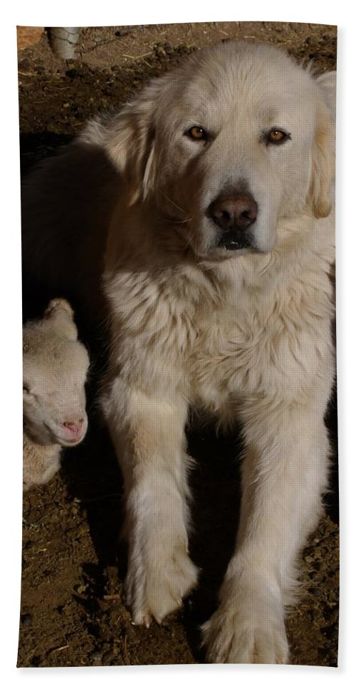 Great Pyrenees Bath Towel featuring the photograph Close Personal Protection by Charles and Melisa Morrison