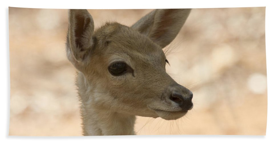 Juvenile Deer Hand Towel featuring the photograph Close-up by Douglas Barnard