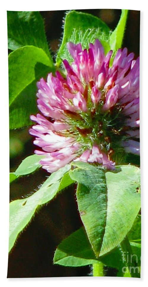 Clover Bath Sheet featuring the photograph Clover Blossom Day by Rory Sagner