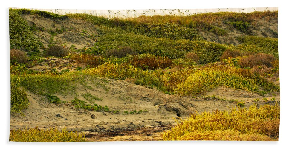 Texas Hand Towel featuring the photograph Coastal Plants On Dunes by Marilyn Hunt