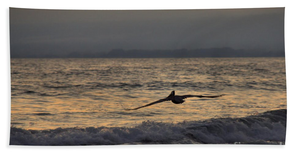 Brown Pelican Bath Sheet featuring the photograph Coasting by James Anderson