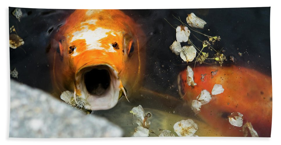 Koi Bath Sheet featuring the photograph Cocky Catskills Koi by Lorraine Devon Wilke