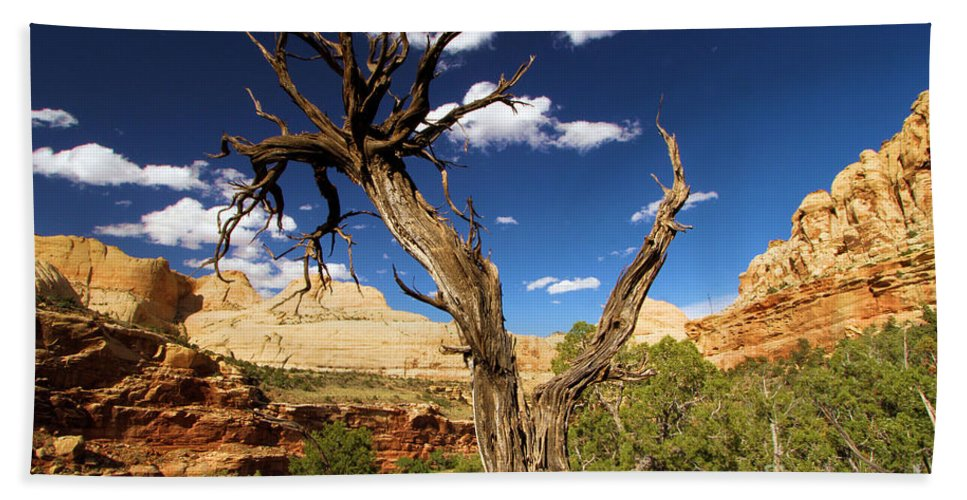 Capitol Reef Hand Towel featuring the photograph Cohab Canyon At Capitol Reef by Adam Jewell