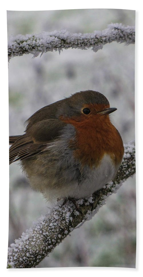 Robin Hand Towel featuring the photograph Cold Robin by David Gleeson