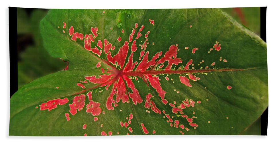 Nature Bath Sheet featuring the photograph Colius Leaf by Debbie Portwood