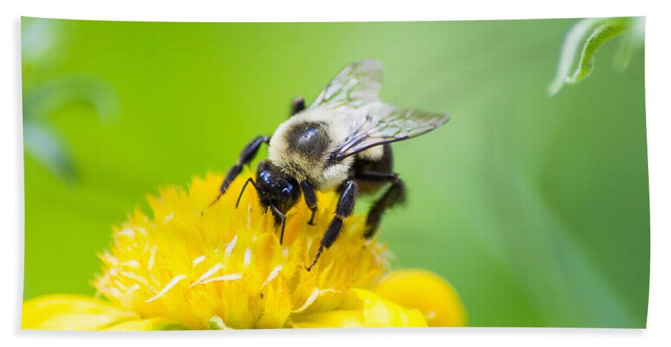 Bumble Bee Bath Sheet featuring the photograph Collecting by Shannon Harrington