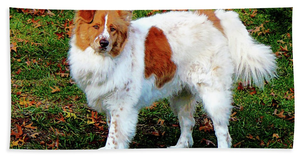 Dog Bath Sheet featuring the photograph Collie On Lawn by Susan Savad
